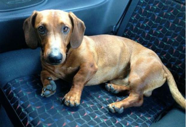Панчево: Мали Лео, пас херој, добија споменик!