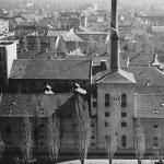 Vajfertova pivara 1952.