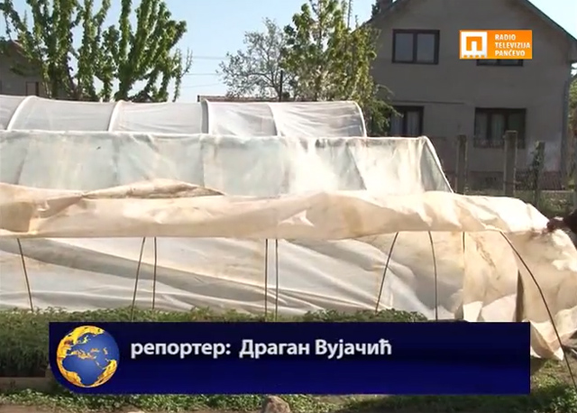 Добар расад кључан за добар род