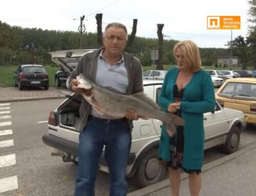 2014.g Uhvaćen najveći smuđ u Evropi [Video]